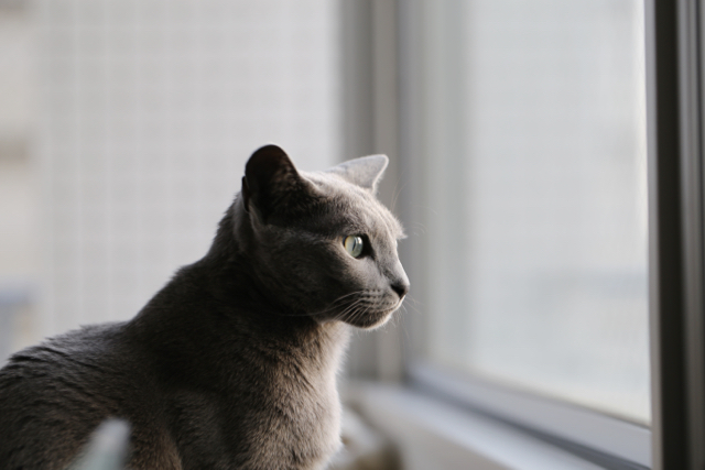 窓の外を見る