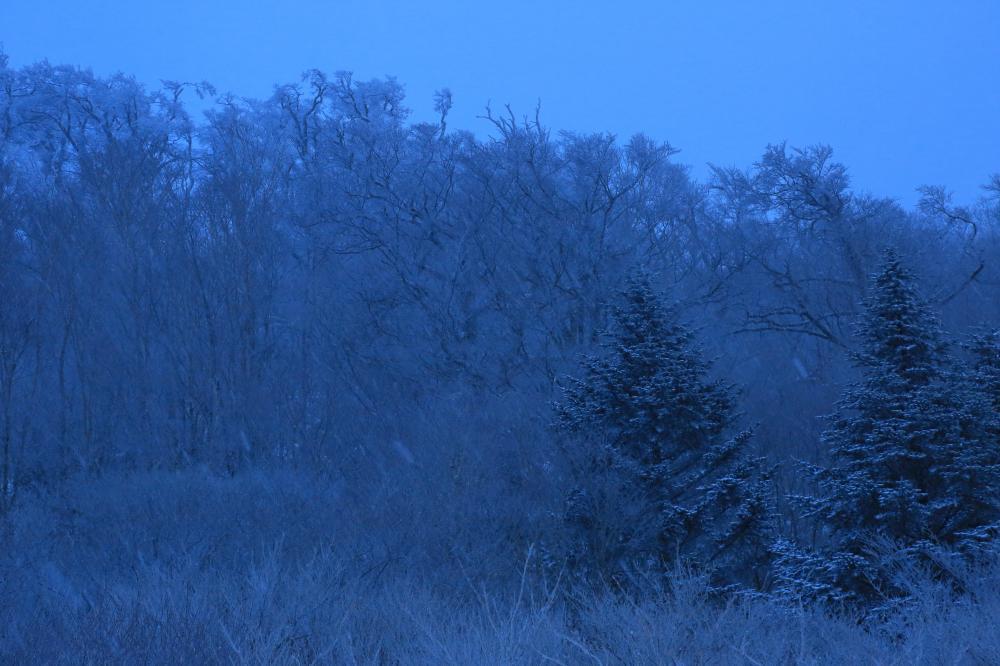 雪、降り積む