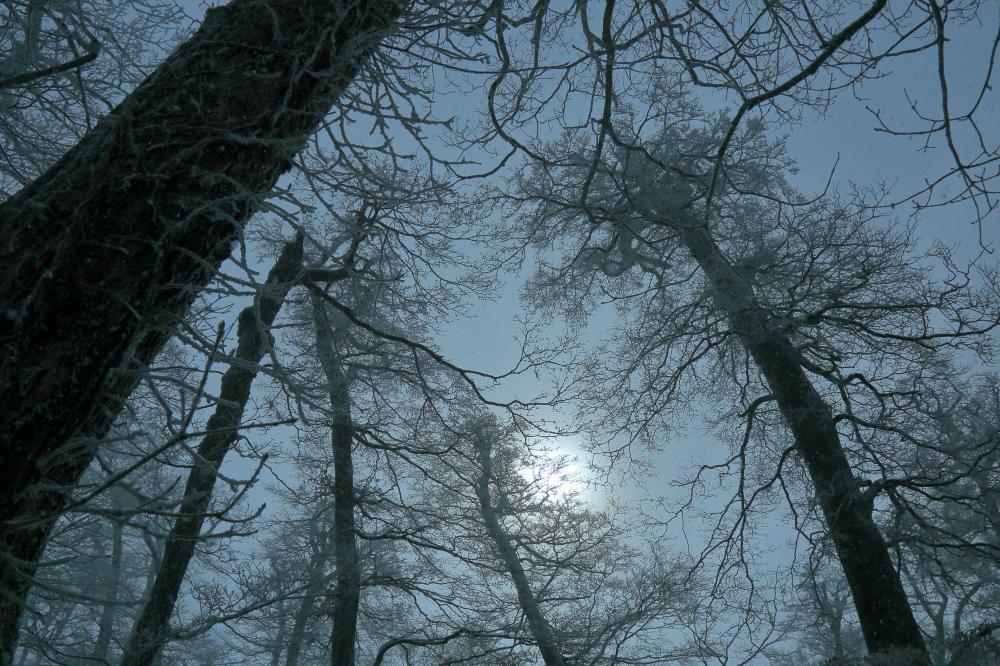 白日と霧氷