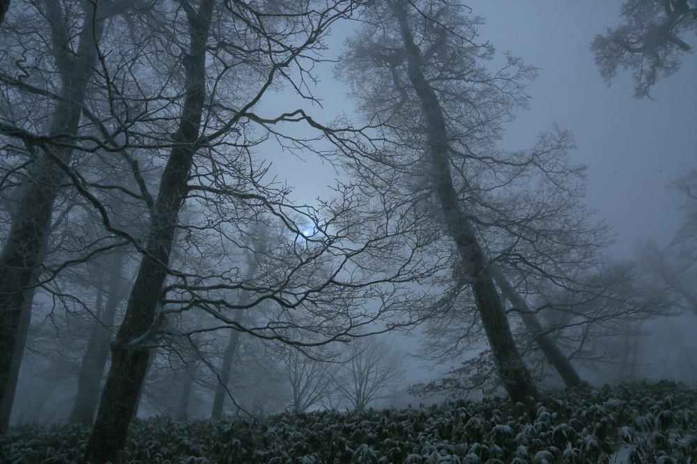 冬のブナ林