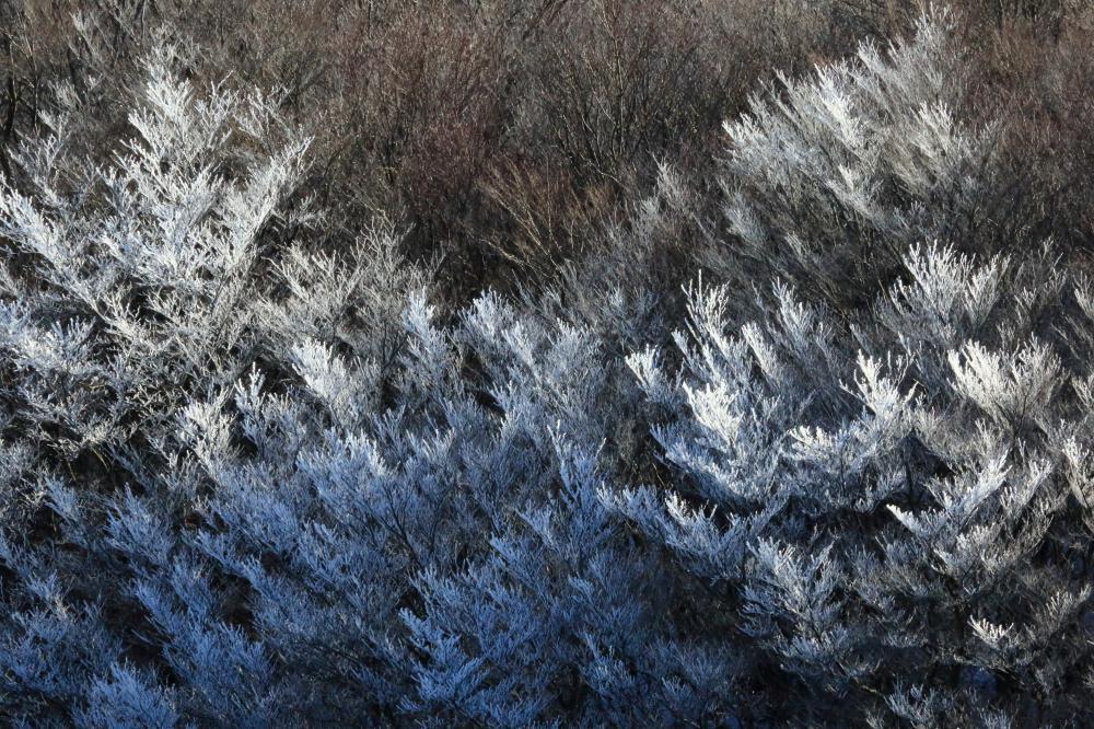 霧氷のつく木
