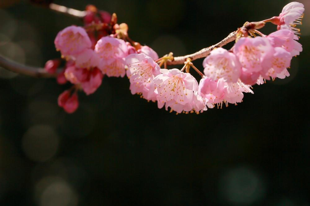 花咲くころ