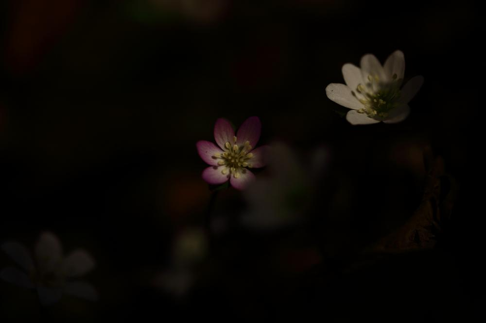 光を浴びて咲く