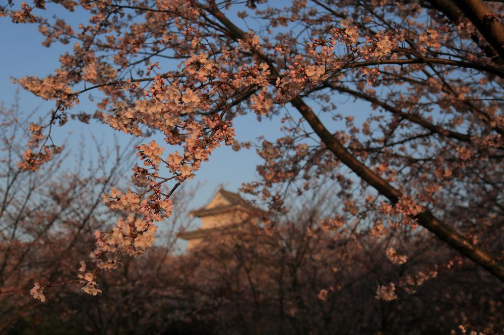 朝陽の丸亀城