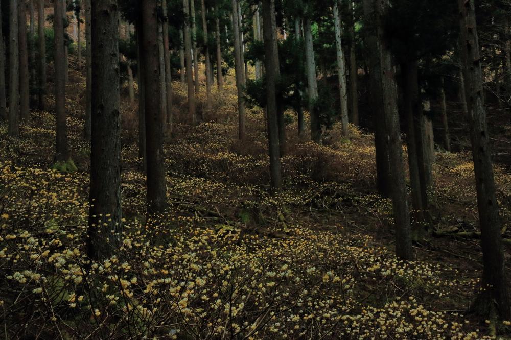 黄色の星々