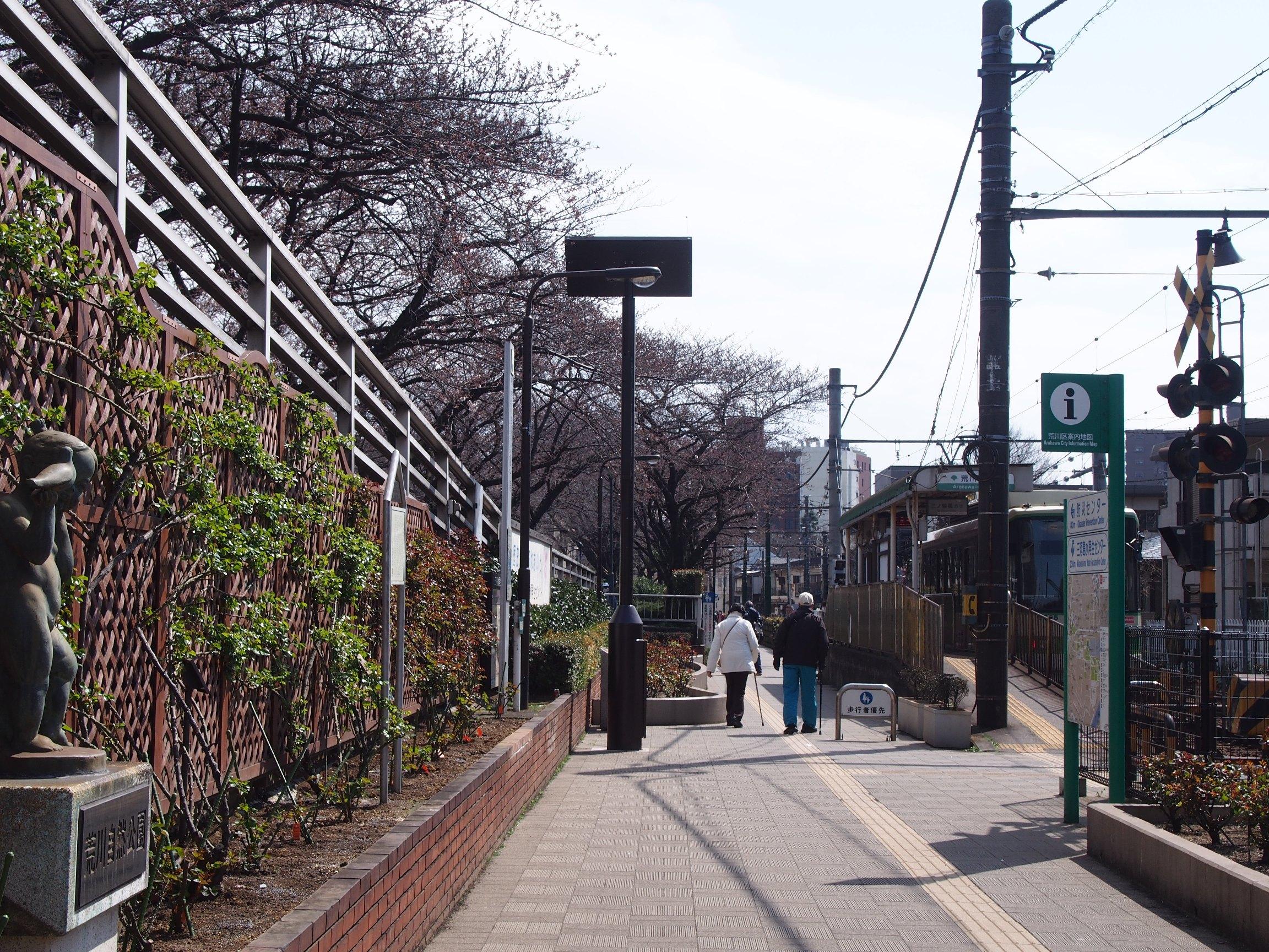 160326ソメイヨシノ(荒川2丁目口) (2)