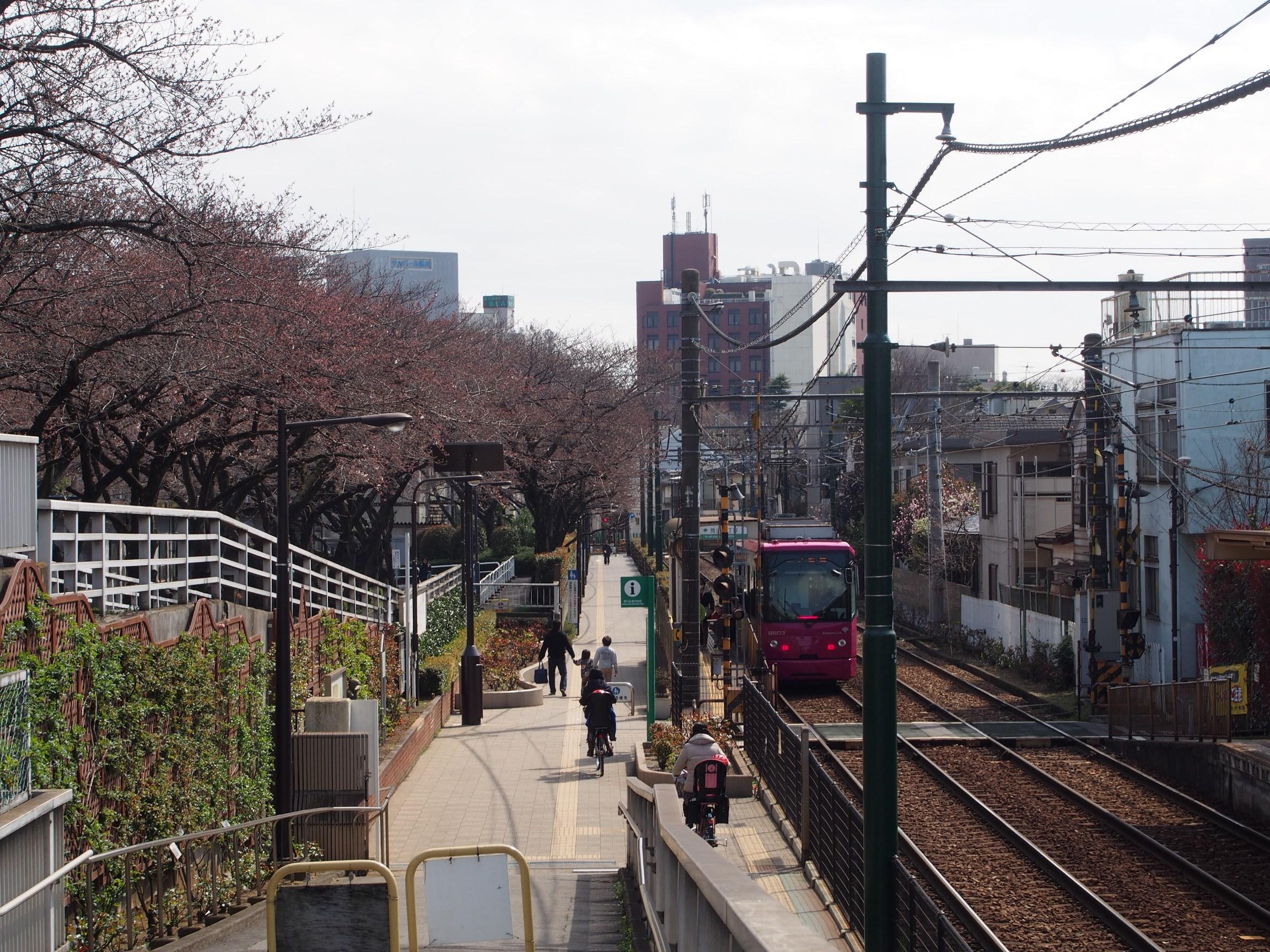 160326ソメイヨシノ(荒川2丁目口) (7)
