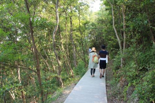 0065:豊島美術館 巡回路となる森を抜けていく