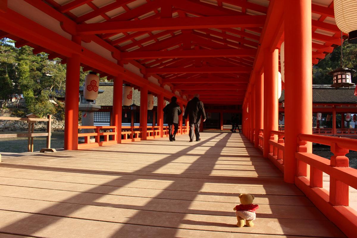 厳島神社回廊を歩くくまちゃん 160107