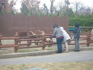 ウマ舎の柵を新しく、低くし、ウマを見やすくした