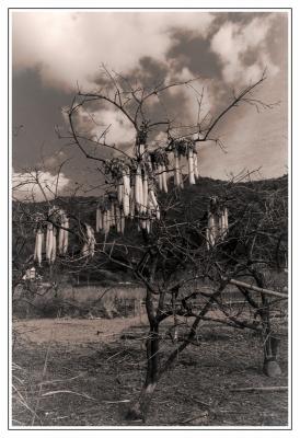 大根の木-Edit