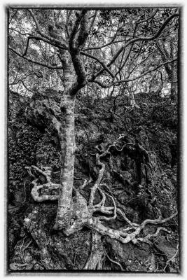 20160312-cliff_tree.jpg