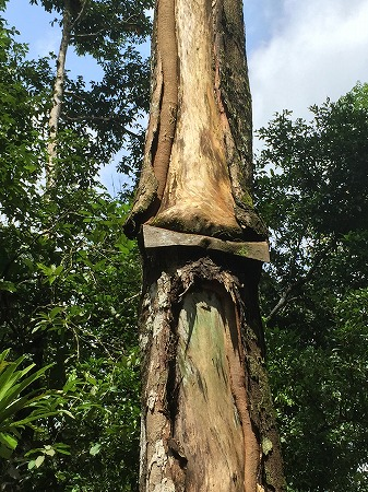 標識を飲み込む木