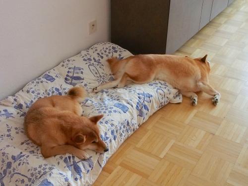 寝相の悪い犬