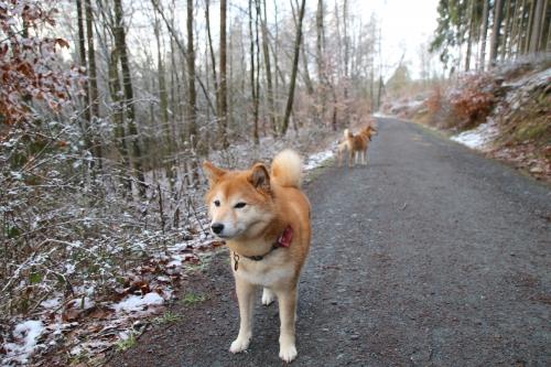 留守番前の山散歩2