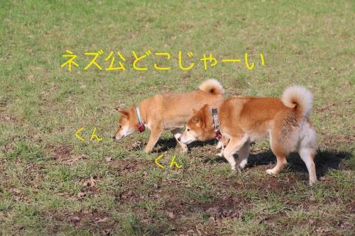 2月25日2016年快晴4