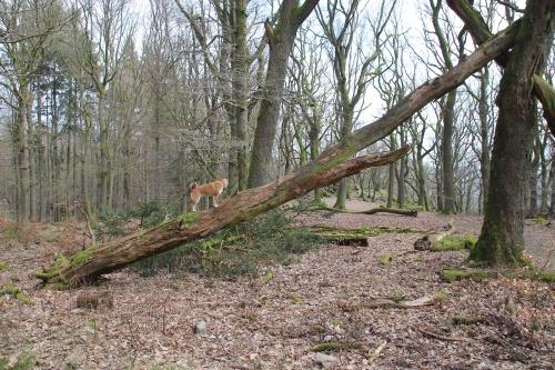 木登りセナたん