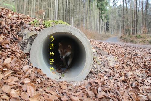 トンネルくぐり