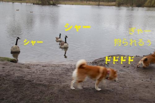 鳥に撃退されるセナ