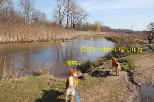 泥川を泳ぐ黒い犬