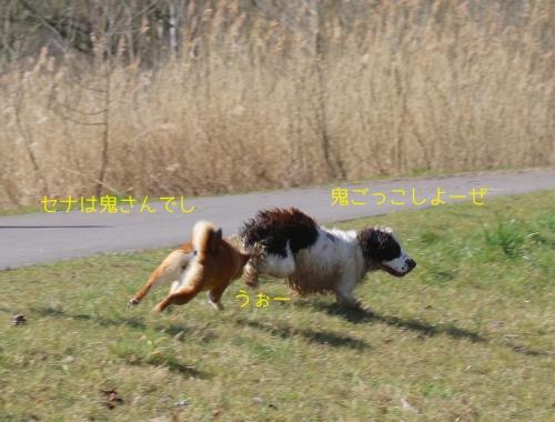 オランダ犬と鬼ごっこ