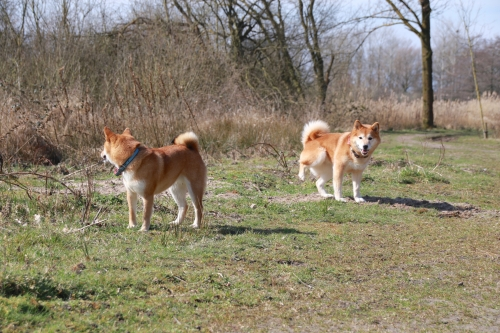 オランダ散歩風景26.03