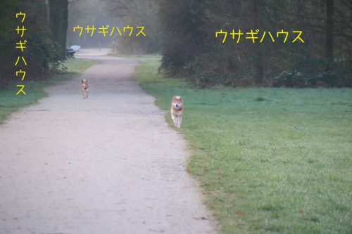 ウサギハウスx3