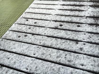 雪がちょっと積もりました
