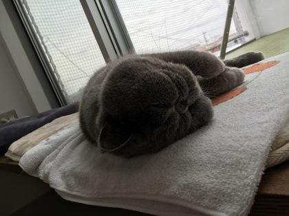 こてっと寝て