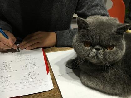 お勉強のお手伝い