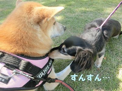 s-tayori160122-CIMG0549