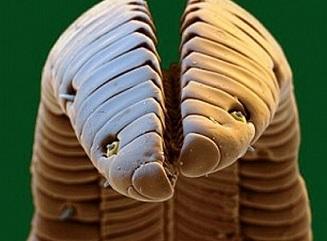 ハチドリの舌
