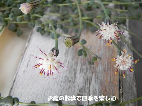 guri-nnekuresu4.jpg