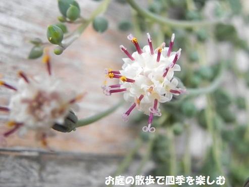guri-nnekuresu5.jpg