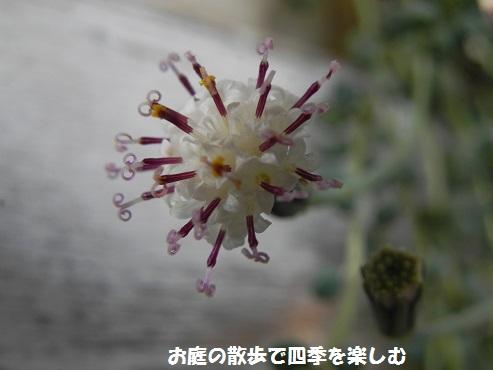 guri-nnekuresu6.jpg