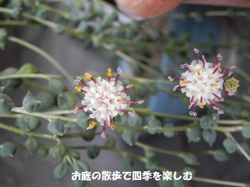 guri-nnekuresu7.jpg