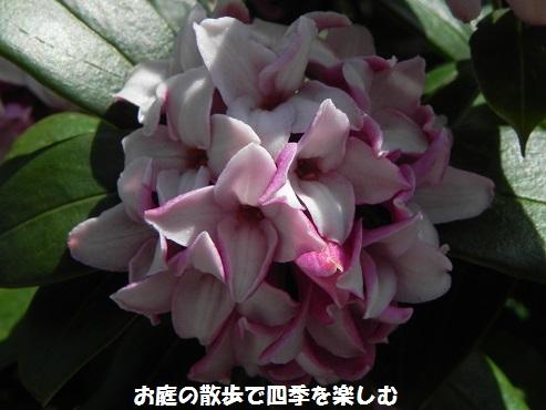 jintyouge42_20160324194607f91.jpg