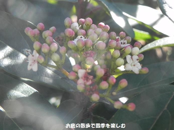 niwa141.jpg