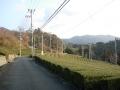 160221石寺地区の茶畑
