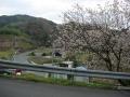 160320咲いている桜も