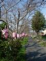 160327桜は、もう少し先