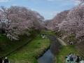 160402井手町桜まつり、玉川を挟んで