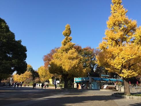 上野公園イチョウ