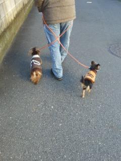 杏樹ちゃんお散歩