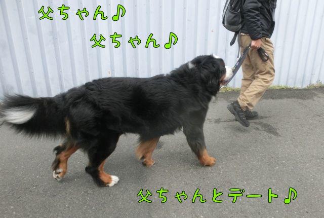 CIMG1364_20160222133646c19.jpg