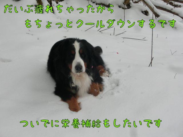 CIMG2472_2016031318045724a.jpg