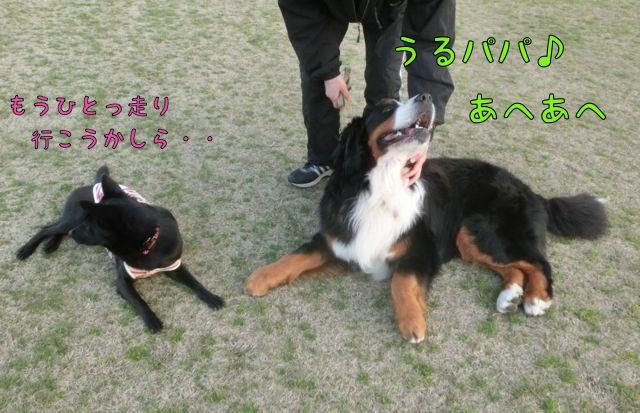 CIMG2968.jpg