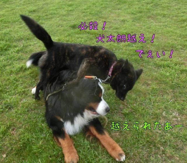 CIMG3011_201603241229421af.jpg