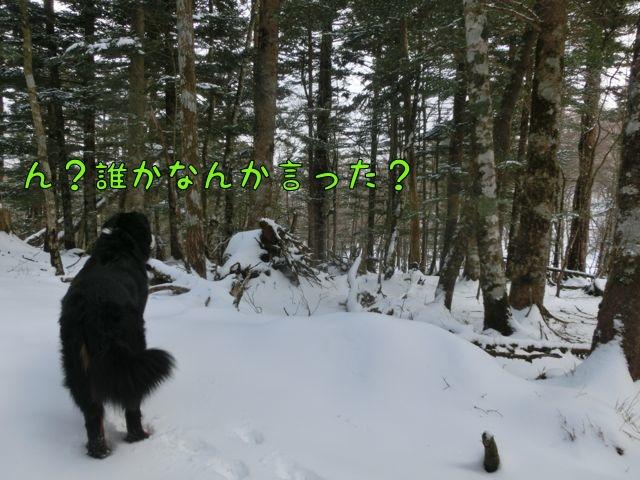 CIMG3307.jpg
