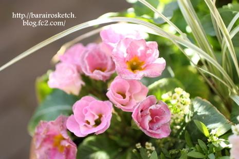 ピンクの寄せ植え02